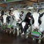 Dairy Ration Management
